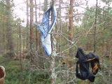 стринги на дереве в лесу...нет грибов, собирайте стринги)))